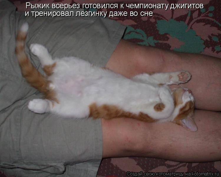 Котоматрица: Рыжик всерьез готовился к чемпионату джигитов  и тренировал лезгинку даже во сне
