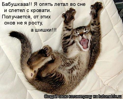 Котоматрица: Бабушкааа!! Я опять летал во сне  и слетел с кровати.  Получается, от этих  снов не я росту,  а шишки!!!