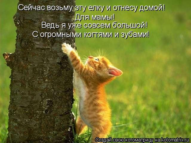 Котоматрица: Сейчас возьму эту елку и отнесу домой!  Для мамы!  Ведь я уже совсем большой! С огромными когтями и зубами!