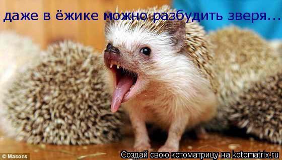 Котоматрица: даже в ёжике можно разбудить зверя...