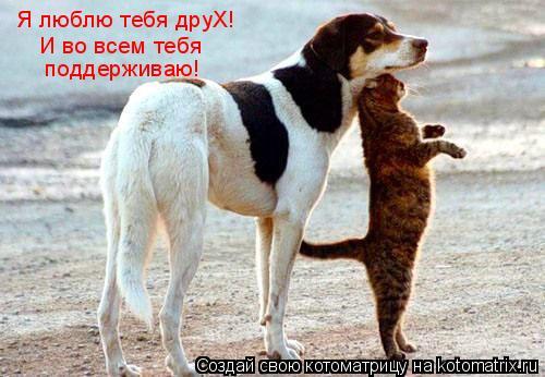 Котоматрица: Я люблю тебя друХ!  И во всем тебя  поддерживаю!