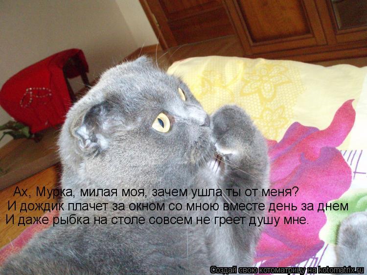 Котоматрица: Ах, Мурка, милая моя, зачем ушла ты от меня? И дождик плачет за окном со мною вместе день за днем И даже рыбка на столе совсем не греет душу мне