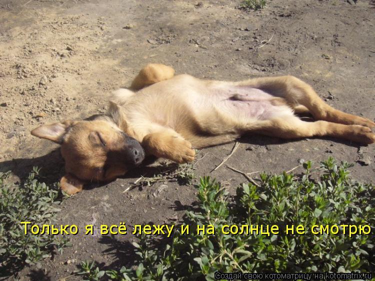 Котоматрица: Только я всё лежу и на солнце не смотрю