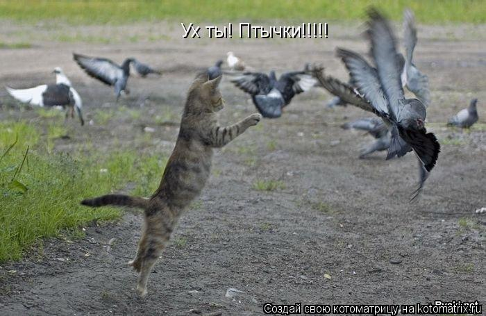 Котоматрица: Ух ты! Птычки!!!!!