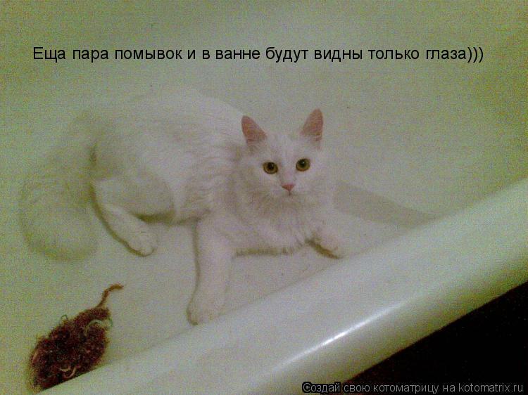 Котоматрица: Еща пара помывок и в ванне будут видны только глаза)))