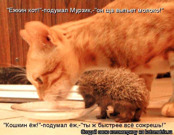"""Котоматрица: """"Кошкин ёж!""""-подумал ёж,-""""ты ж быстрее всё сожрешь!"""" """"Ежкин кот!""""-подумал Мурзик,-""""он ща выпьет молоко!"""""""