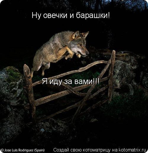 Котоматрица: Ну овечки и барашки! Я иду за вами!!!