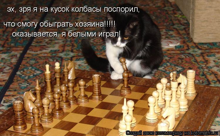 Котоматрица: эх, зря я на кусок колбасы поспорил,  что смогу обыграть хозяина!!!!! оказывается, я белыми играл!