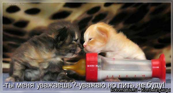 Котоматрица: -ты меня уважаешь?-уважаю,но пить не буду!