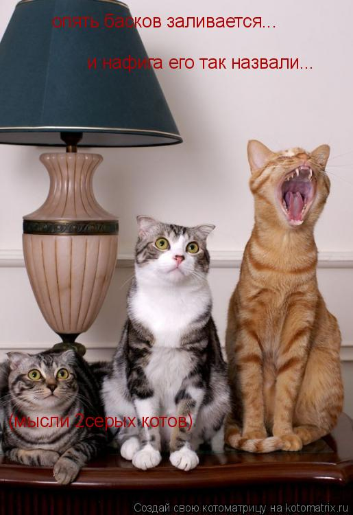 Котоматрица: (мысли 2серых котов) опять басков заливается... и нафига его так назвали...