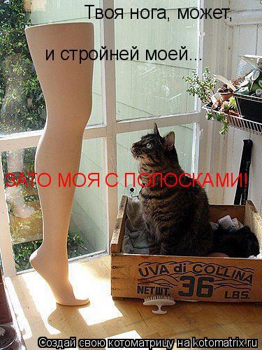 Котоматрица: Твоя нога, может,  и стройней моей... ЗАТО МОЯ С ПОЛОСКАМИ!