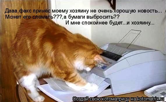Котоматрица: Дааа,факс принёс моему хозяину не очень хорошую новость... Может его сломать???,а бумаги выбросить?? И мне спокойнее будет...и хозяину...