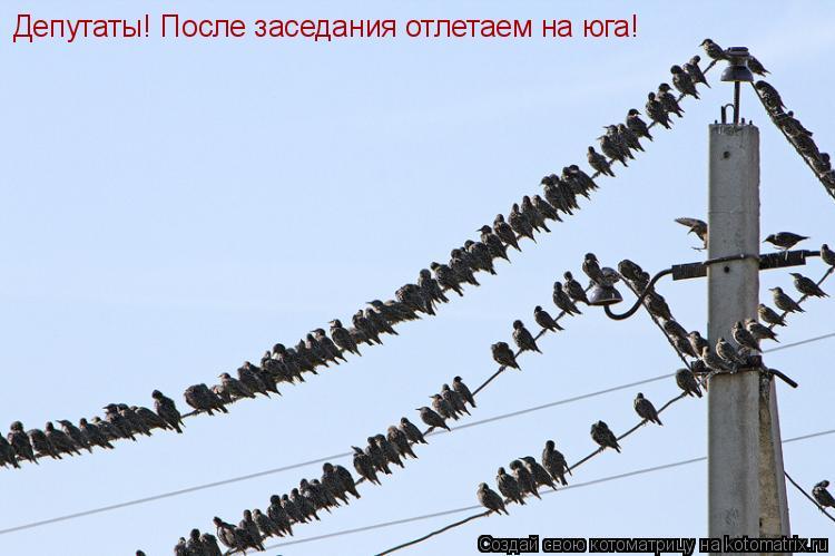 Котоматрица: Депутаты! После заседания отлетаем на юга!