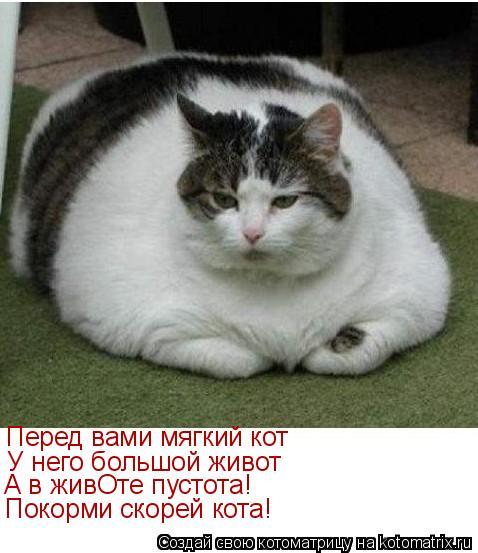 Котоматрица: Перед вами мягкий кот У него большой живот А в живОте пустота! Покорми скорей кота!