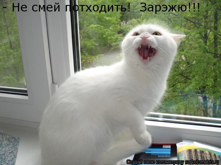Котоматрица: - Не смей потходить!  Зарэжю!!!