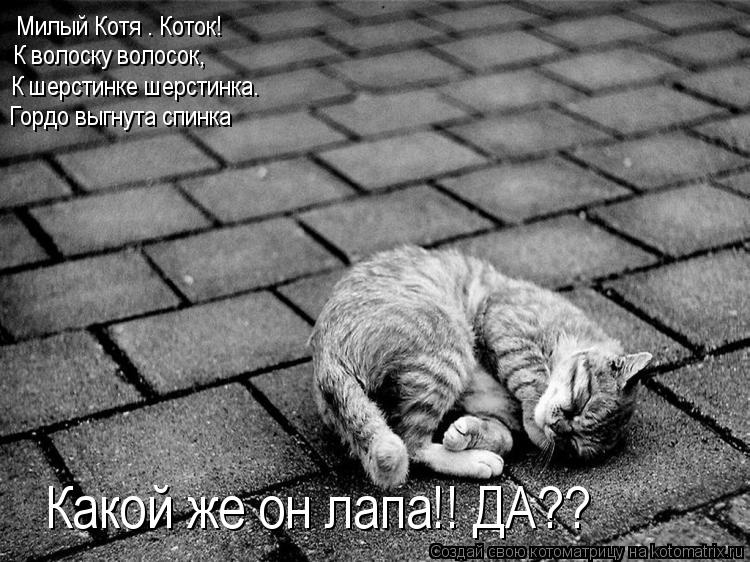 Котоматрица: Милый Котя – Коток! К волоску волосок, К шерстинке шерстинка. Гордо выгнута спинка Какой же он лапа!! ДА??