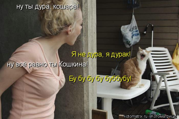 Котоматрица: ну ты дура, кошара! Я не дура, я дурак! ну всё равно ты Кошкина! Бу бу бу бу буббубу!
