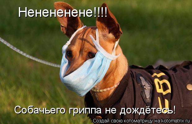 Котоматрица: Ненененене!!!! Собачьего гриппа не дождётесь!