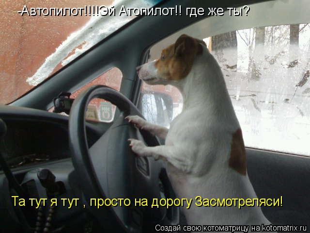 Котоматрица: -Автопилот!!!!Эй Атопилот!! где же ты? Та тут я тут , просто на дорогу Засмотреляси!