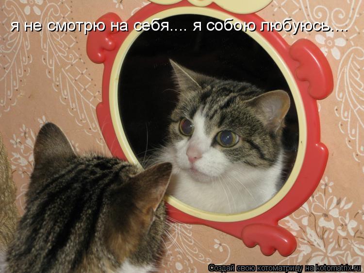 Котоматрица: я не смотрю на себя.... я собою любуюсь....