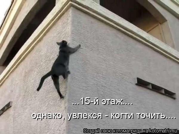 Котоматрица: однако, увлекся - когти точить.... ...15-й этаж....