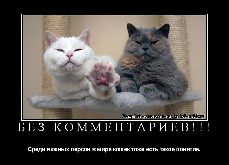 Котоматрица: БЕЗ КОММЕНТАРИЕВ!!! Среди важных персон в мире кошек тоже есть такое понятие.