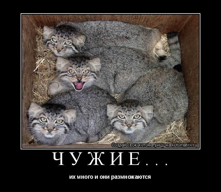 Котоматрица: ЧУЖИЕ... их много и они размножаются