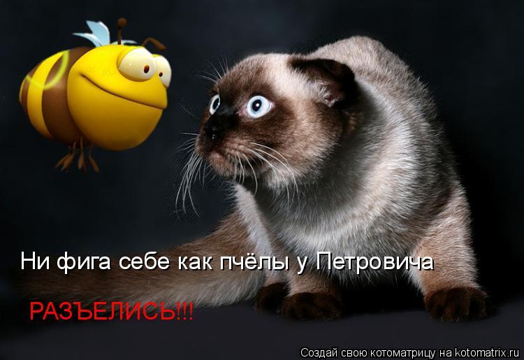 Котоматрица: Ни фига себе как пчёлы у Петровича РАЗЪЕЛИСЬ!!!