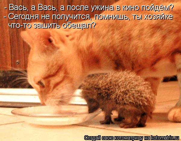 Котоматрица: - Вась, а Вась, а после ужина в кино пойдём? - Сегодня не получится, помнишь, ты хозяйке что-то зашить обещал?
