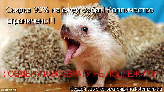Котоматрица: Скидка 90% на ежей-собак! Колличество ограничено!!! ( ОБМЕНУ И ВОЗВРАТУ НЕ ПОДЛЕЖИТ!)