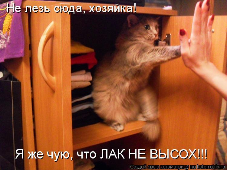 Котоматрица: Не лезь сюда, хозяйка!  Я же чую, что ЛАК НЕ ВЫСОХ!!!