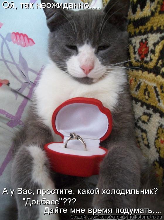 """Котоматрица: Ой, так неожиданно.... А у Вас, простите, какой холодильник? """"Донбасс""""??? Дайте мне время подумать...."""