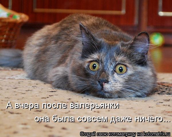 Котоматрица: А вчера после валерьянки она была совсем даже ничего...