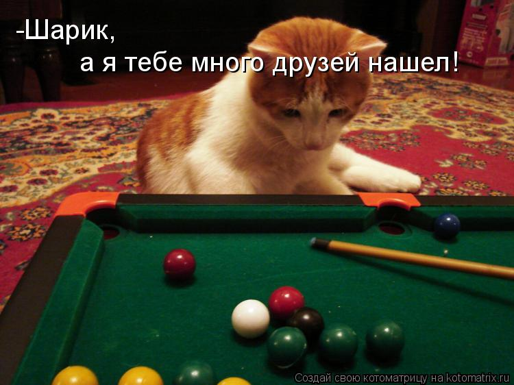Котоматрица: -Шарик,  а я тебе много друзей нашел!
