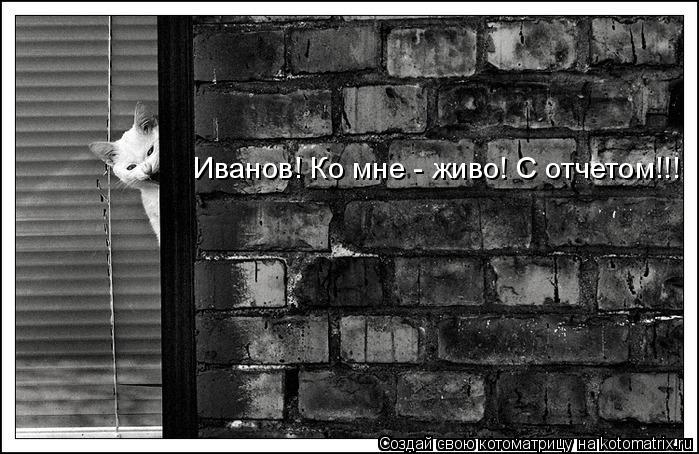 Котоматрица: Иванов! Ко мне - живо! С отчетом!!!