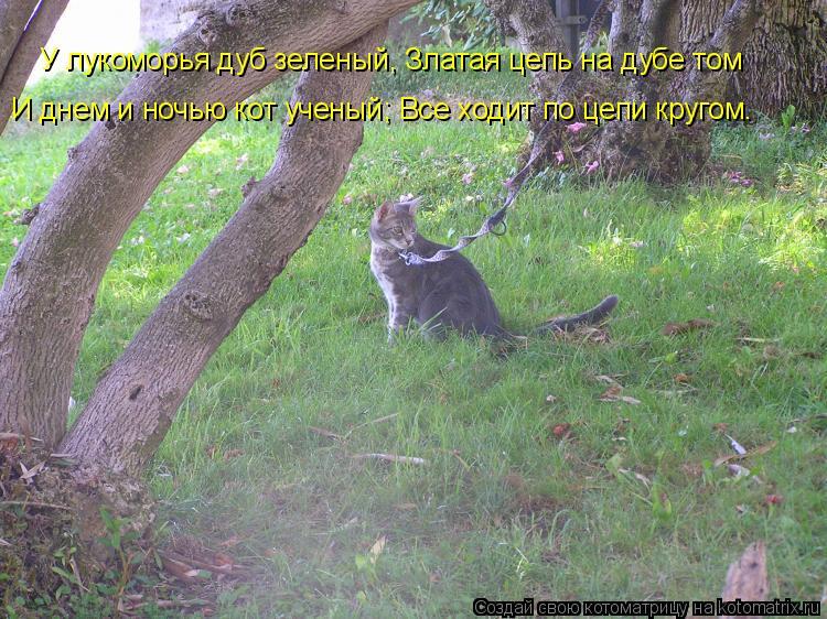 Котоматрица: У лукоморья дуб зеленый, Златая цепь на дубе том  И днем и ночью кот ученый; Все ходит по цепи кругом…