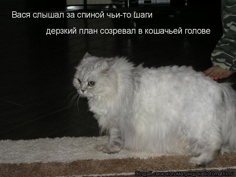 Котоматрица: Вася слышал за спиной чьи-то шаги дерзкий план созревал в кошачьей голове