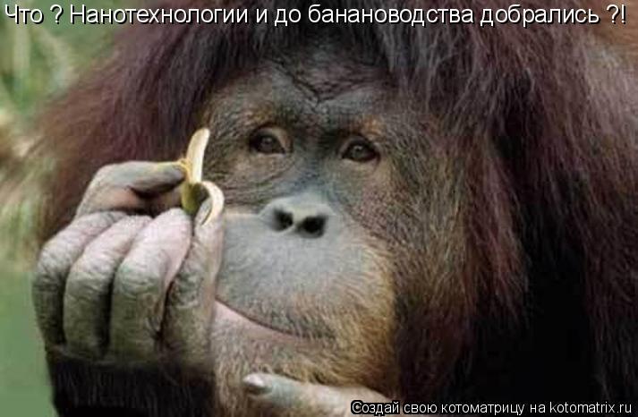 Котоматрица: Что ? Нанотехнологии и до банановодства добрались ?!