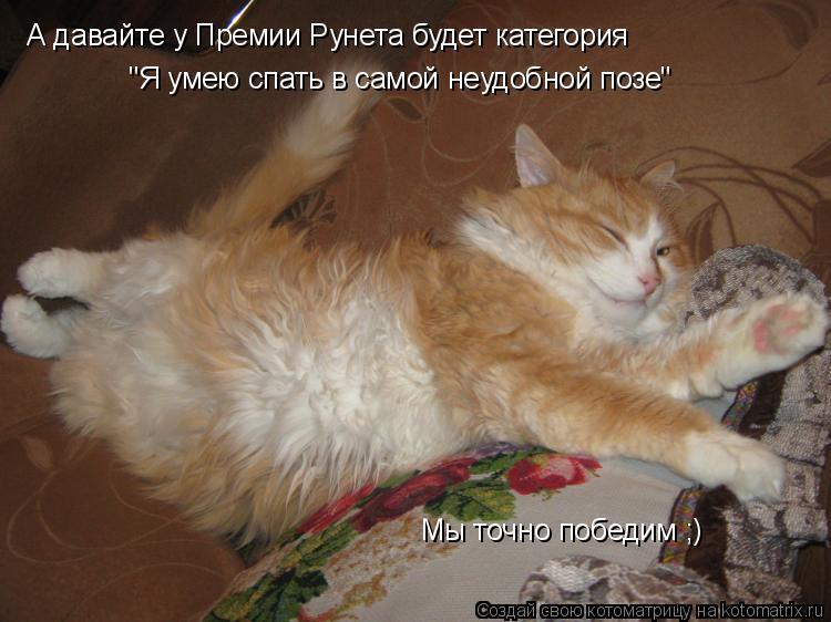 """Котоматрица: А давайте у Премии Рунета будет категория """"Я умею спать в самой неудобной позе"""" Мы точно победим ;)"""