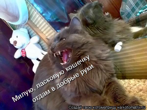 Котоматрица: Милую, ласковую кошечку отдам в добрые руки