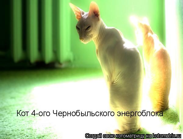 Котоматрица: Кот 4-ого Чернобыльского энергоблока