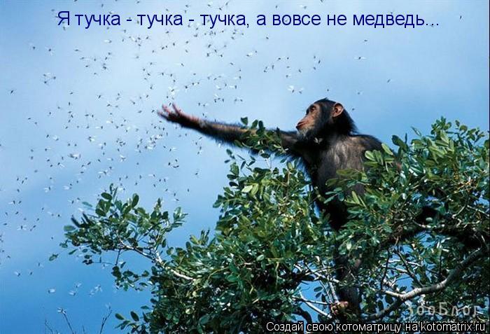 Котоматрица: Я тучка - тучка - тучка, а вовсе не медведь...