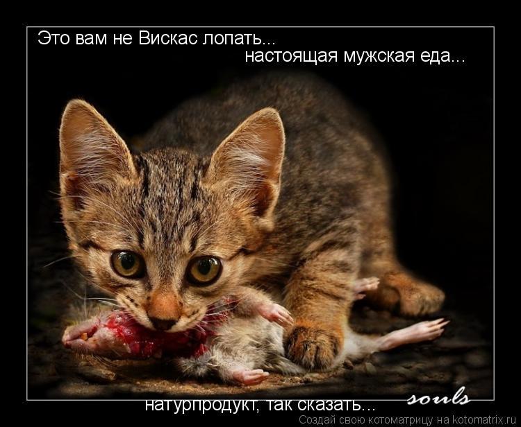 Котоматрица: Это вам не Вискас лопать... настоящая мужская еда... натурпродукт, так сказать...