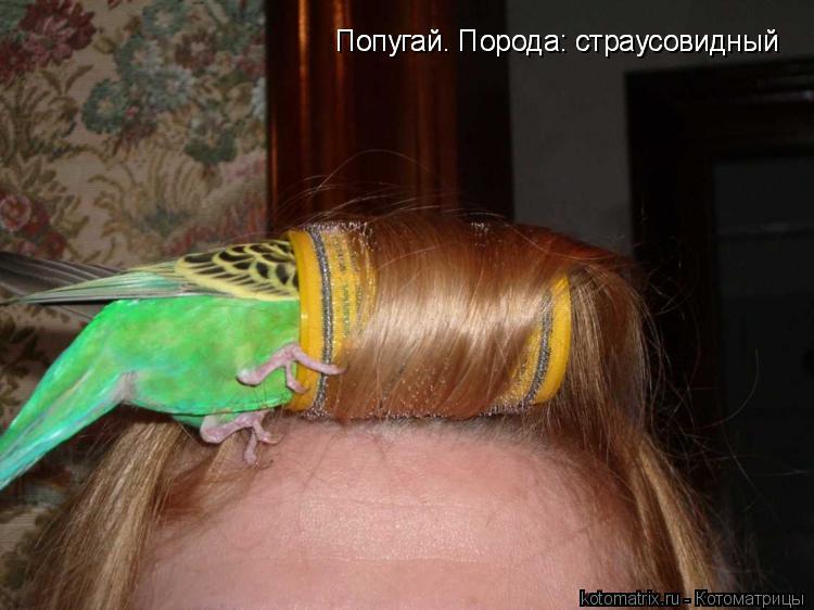 Котоматрица: Попугай. Порода: страусовидный Попугай. Порода: страусовидный