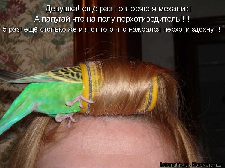 Котоматрица: Девушка! ещё раз повторяю я механик! А папугай что на полу перхотиводитель!!!! 5 раз! ещё столько же и я от того что нажрался перхоти здохну!!!