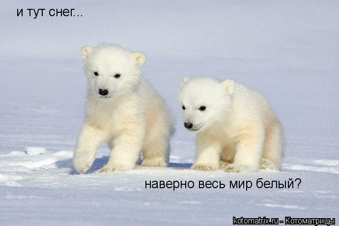 Котоматрица: и тут снег... наверно весь мир белый?