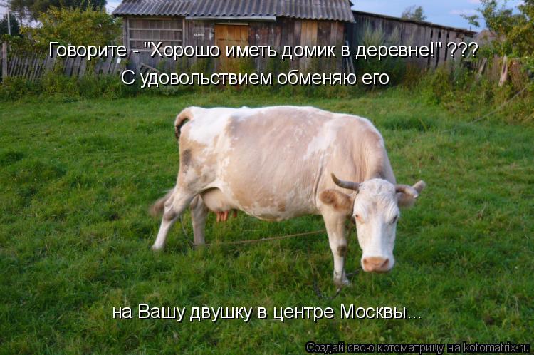 """Котоматрица: Говорите - """"Хорошо иметь домик в деревне!"""" ??? С удовольствием обменяю его  на Вашу двушку в центре Москвы..."""