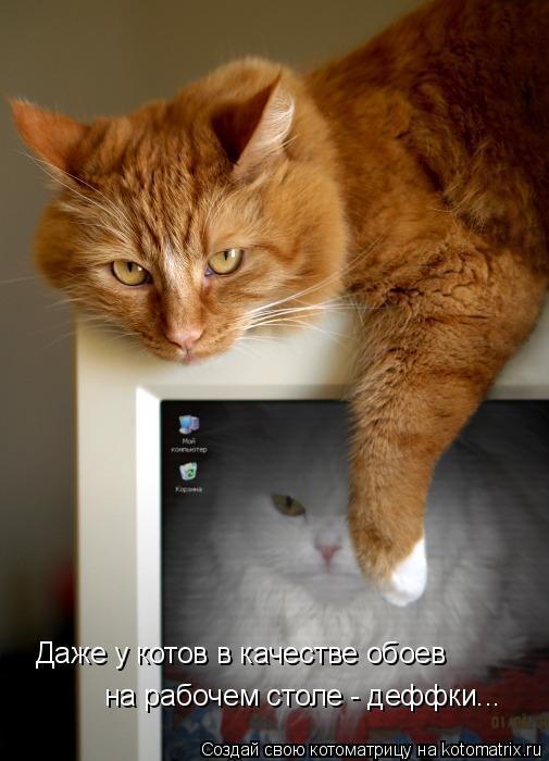 Котоматрица: Даже у котов в качестве обоев  на рабочем столе - деффки...