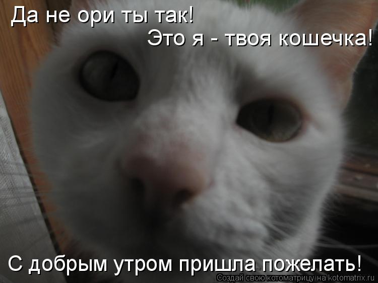Котоматрица: Да не ори ты так! Это я - твоя кошечка! С добрым утром пришла пожелать!