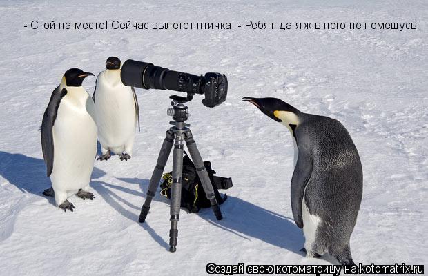 Котоматрица: - Стой на месте! Сейчас вылетет птичка! - Ребят, да я ж в него не помещусь!